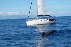 Whale and Dolphin Watching Sailing Boat with Drinks, Snacks and Swimming Time