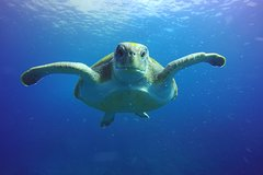 Snorkeling with Turtles (Boat trip included) in Costa Adeje