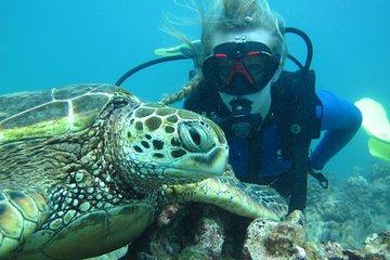 Beginner Scuba Diving with Turtles in Honolulu