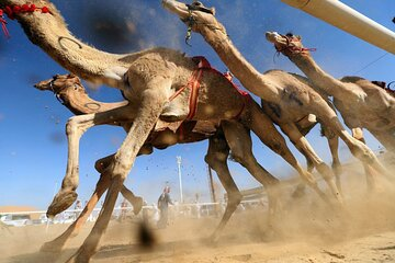 Ticket to Dubai Royal Camel Racing Club with pickup included