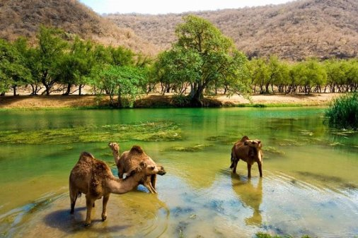 East Jewels of Salalah with Wadi Darbat :Oman Shore excurions 2021