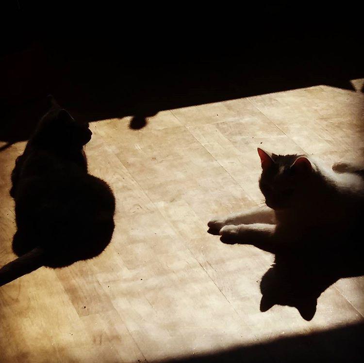 Dagens solbad #katter #kattliv #sommar #sola