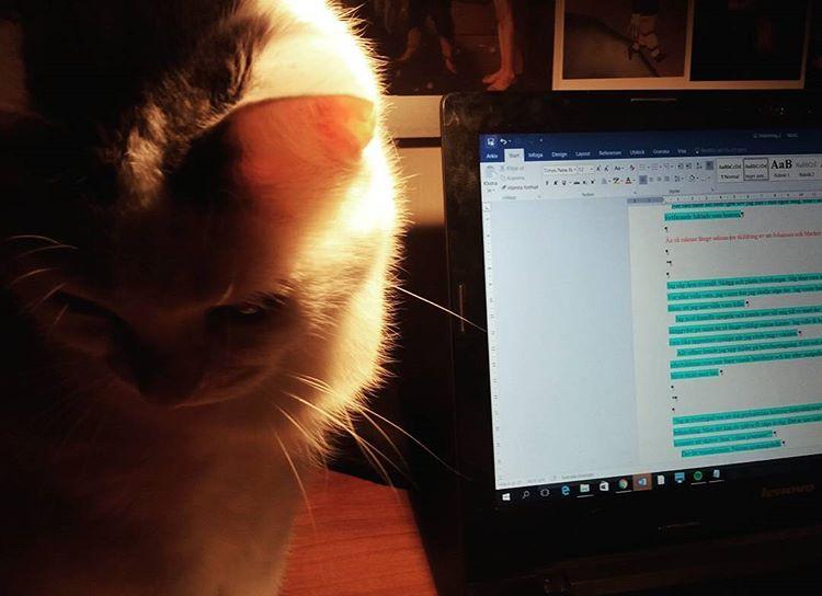 Min husse bryr sig bara om sitt Worddokument 😿 #stackarskatt #katter #skrivande