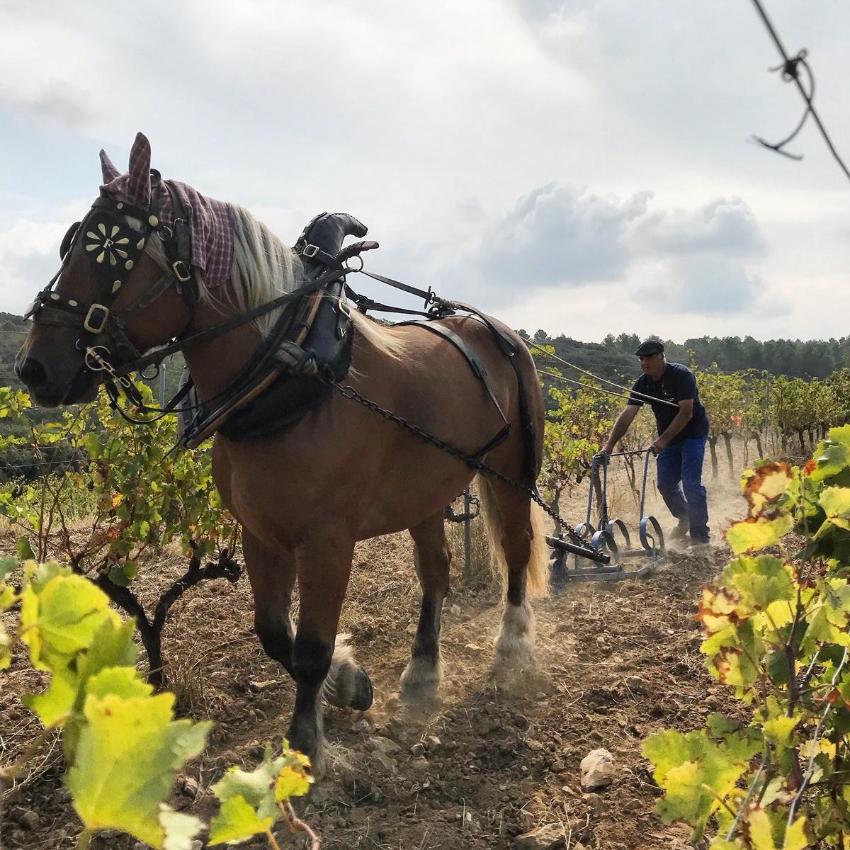 labour a cheval