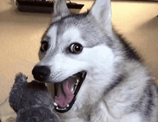 Image result for dog grin pun