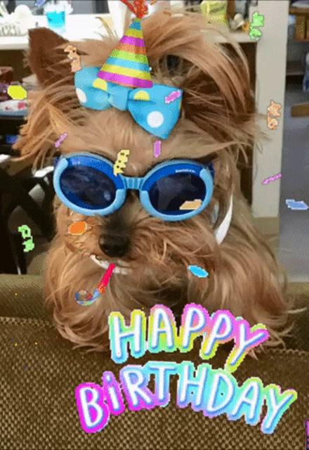 Birthday Dog Gifs Tenor