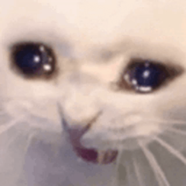 Crying Cat Meme Blank Template Imgflip