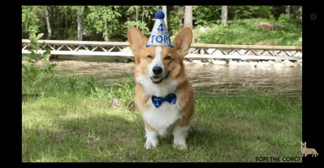 Birthday Corgi Gifs Tenor