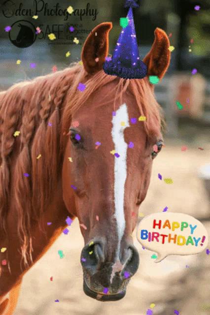 Happy Birthday Horse Gifs Tenor