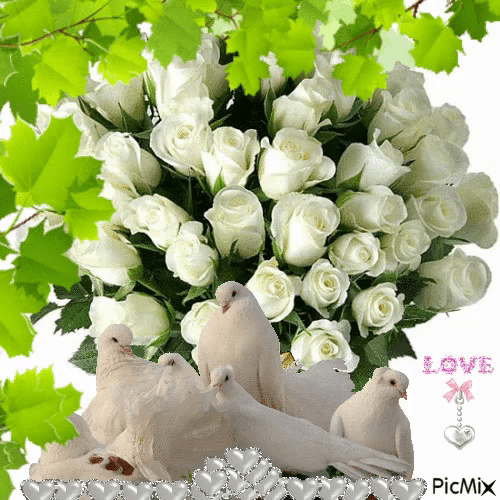 White Roses Gifs Tenor