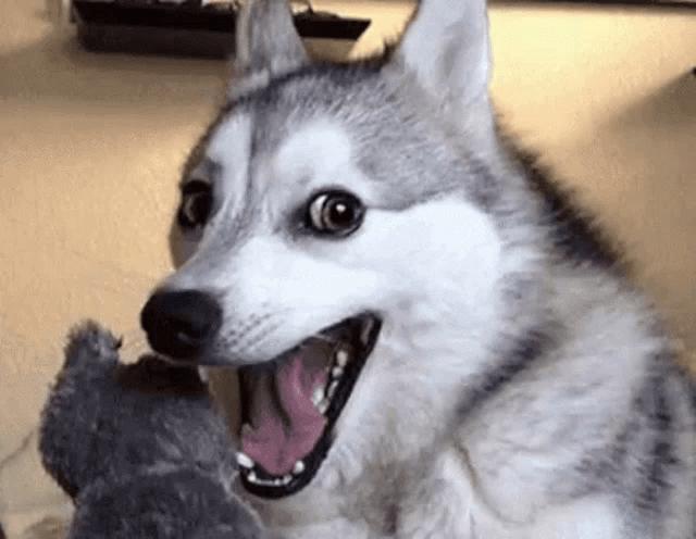Dog Smiling Meme Gifs Tenor