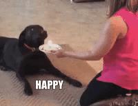 Happy Labrador Gifs Tenor