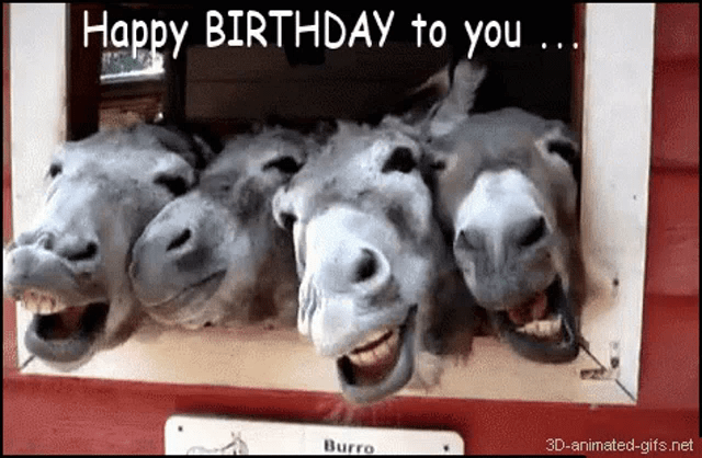 Funny Happy Birthday Animals Gifs Tenor