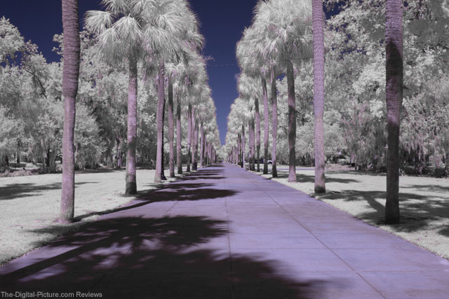 The Right Lens Can Make All the Difference in IR Photography (Part 1)