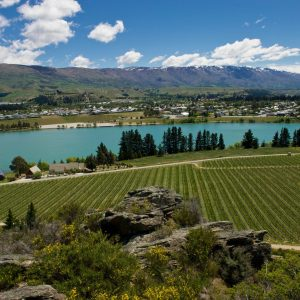 Top Wineries of New Zealand: 4 to 1