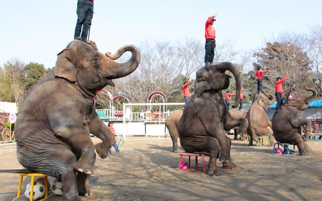 市原ゾウの国ショー
