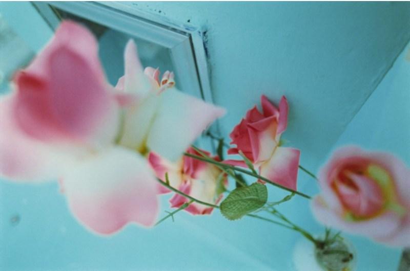 Pink Rose Suite