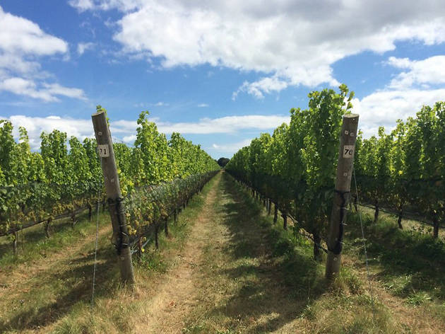 Best Long Island Wineries From Bedell Cellars To Macari