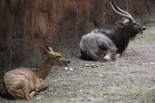 best zoos in America