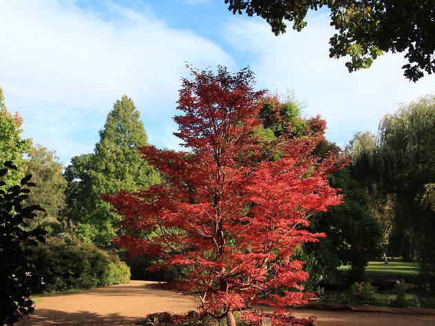 Isabella Plantation in autumn