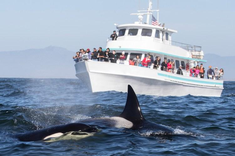 Boston Harbor Cruises - Whale Watching