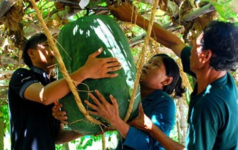 Hình ảnh Chanh 3kg gần nửa triệu, chuối nặng 2kg hút bà nội trợ Việt số 6