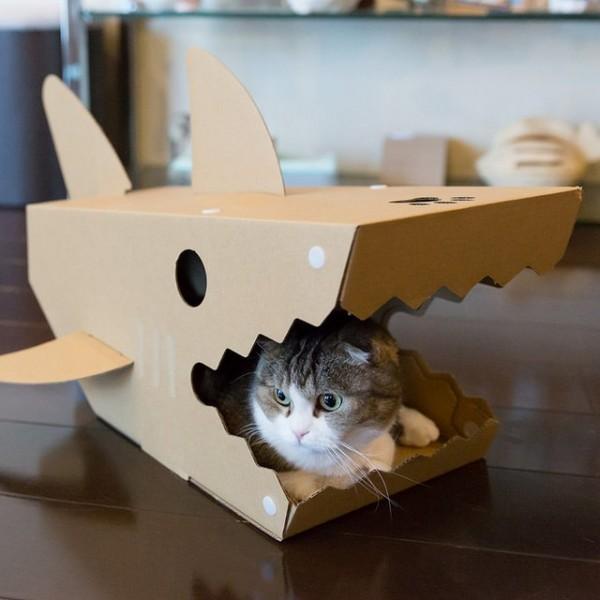 Une Maison Requin Pour Chat Histoire Quil Arrte De Vous