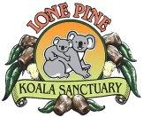 koala lone pine sanctuary brisbane