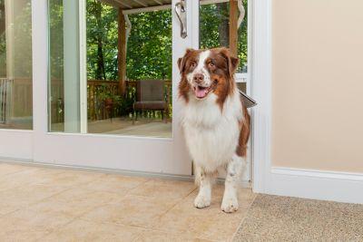 petsafe freedom aluminum patio panel sliding glass pet door white ppa11 13135