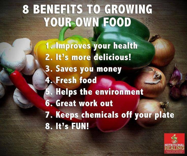 8 Benefits To Growing Your Own Food Trusper