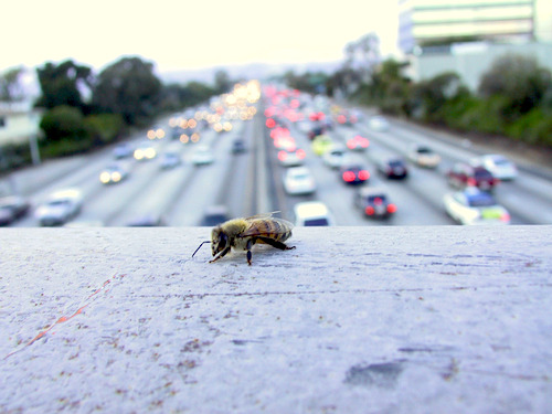 Can Cities Save Our Bees?
