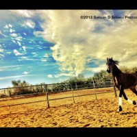 Arabhorse FARM TOUR - Unparalleled Beauty, Elegance, Power