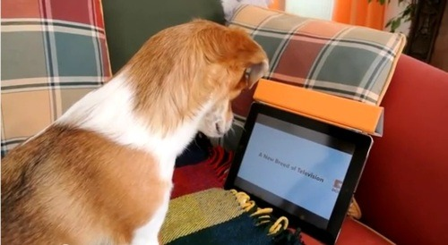 television for dogs