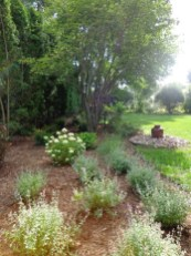 Shrubs and perennials in backyard