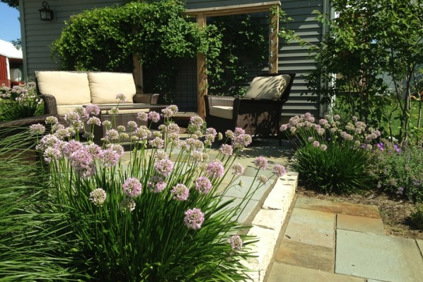 perennials soften patio