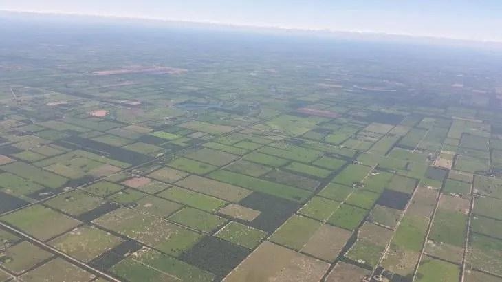 Grandes plantaciones hoy ocupan lo que antes eran bosques nativos.
