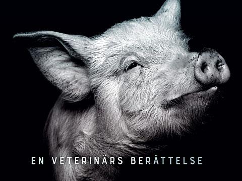 Lina Gustafsson, Rapport från ett slakteri – En veterinärs berättelse