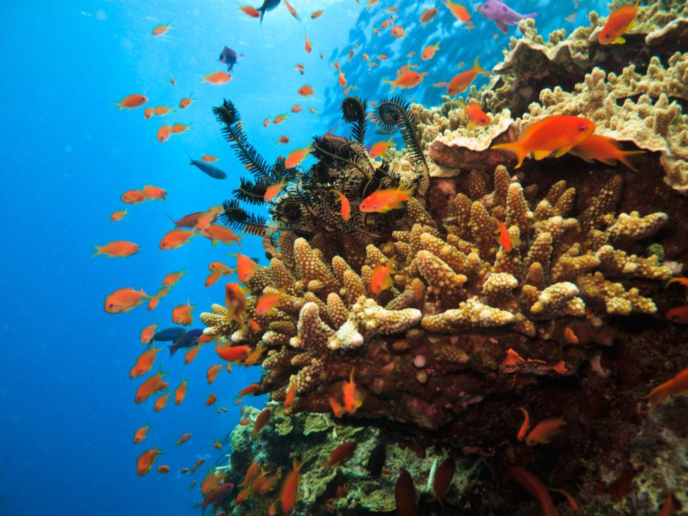 nationalparker i världen, nationalparker i Australien, sevärdheter i Australien, saker att göra i Australien, dyka i Australien, snorkla i Australien, Stora barriärrevet