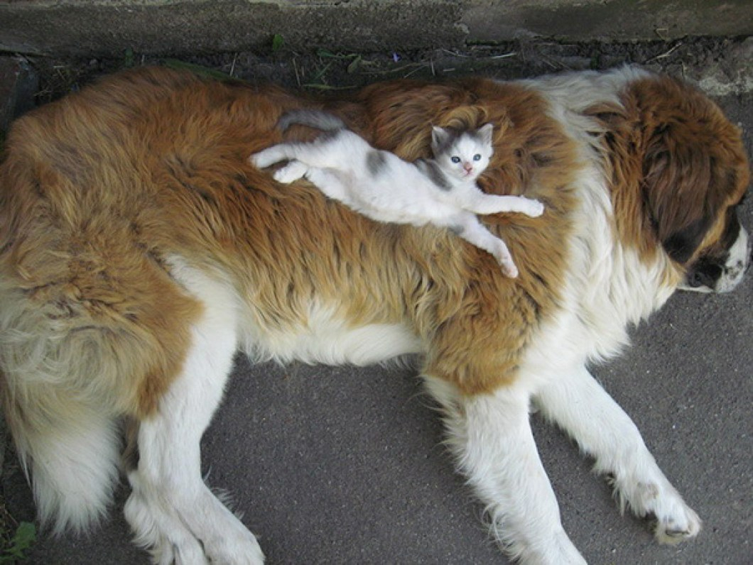 söta katter, söta kattbilder, bilder på katter, roliga katter, roliga kattbilder, roliga bilder på katter, söta hunder, roliga hunder, bilder på hundar, söta bilder på hundar, roliga bilder på hundar, hundbilder, bilder på katter och hundar, katt hund kompisar