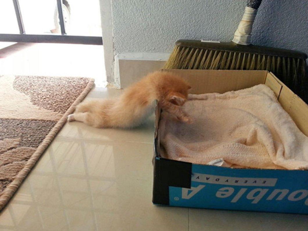 sovande katter, katter sömnbehov, söta katter, söta kattbilder, bilder på katter, roliga katter, roliga kattbilder, roliga bilder på katter