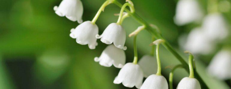 vilda blommor i Sverige, sommarblommor