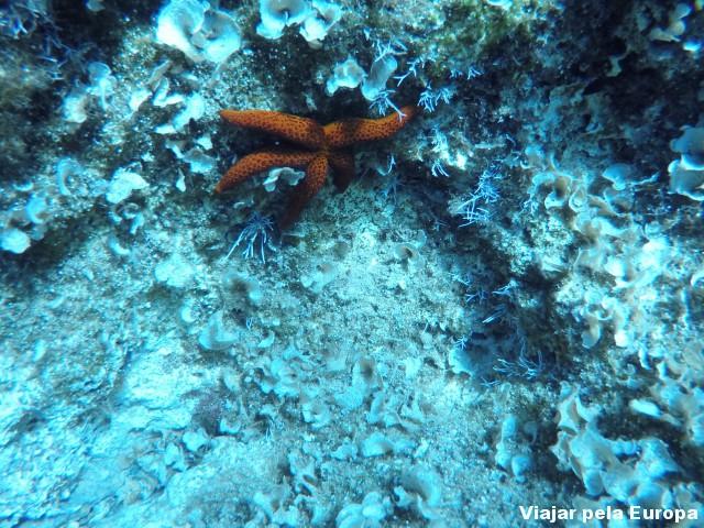 Incrível mergulhar em Creta e ver estrelas do mar!