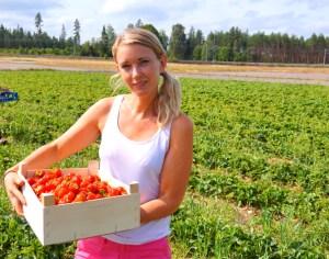 Joxtorps gård i Rönneshytta - självplock av jordgubbar nära Örebro