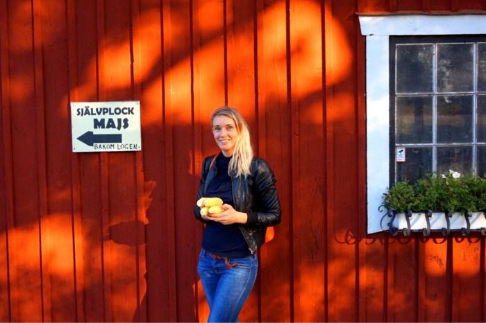 Självplock av majs i Hjortsberga/Kumla