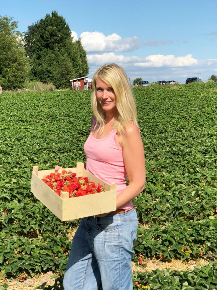 Självplockning av jordgubbar - Råsta bär