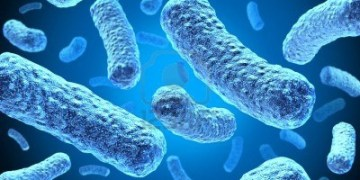 Antibiotic Resistance Growing With No New Drugs on Horizon