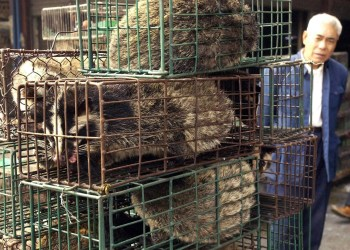 Live Animal Markets Worldwide Can Spawn Ailments, Experts Say