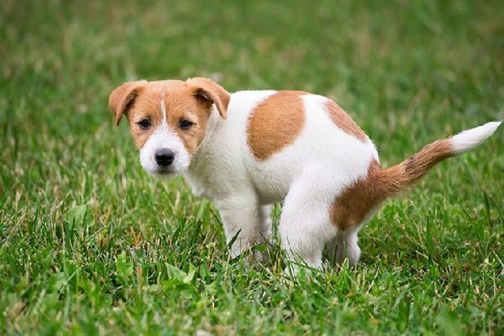 Diarrhea In Dogs And How To Zero The Causes