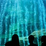 New Exhibits at the Two Oceans Aquarium