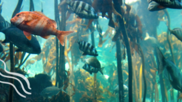 Two Oceans Aquarium Kelp Night